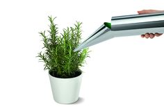 #philippi #wateringcan #garden #greenery #outside