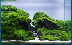 "Aquascape: ""Straight Edge"" by Frederic Fuss (Germany) This years EAPLC lead to a big Surprise for me. I was winning both Wabi Kusa and Nano Category. Hope you find this inspiring. Much of Success to..."