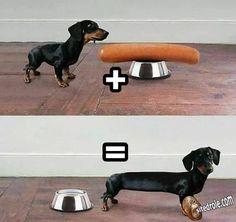 Chien + saucisse = image drole humour