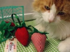 Mewberries - Strawberry catnip toy. $10.00, via Etsy. I wonder if my kitty would like these??