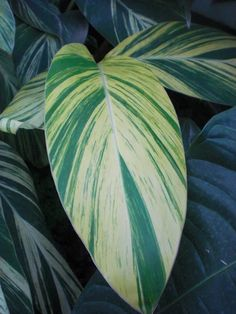 Patterns, shapes and colours in tropical leaves