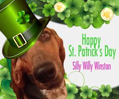 Silly Willy Winston has a twinkle in his eye as he wishes you the luck of the Irish this St. Patrick's Day!