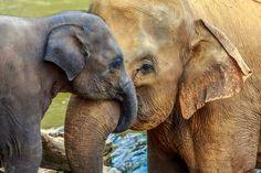 elephant-trunk.jpg (1600×1067)
