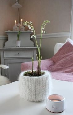 plants definitely grow better when they have handknit sweaters.