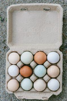 Carton of local organic colorful eggs by Deirdre Malfatto