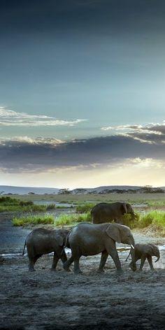 #elephants on walkabout