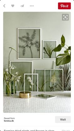 Dried framed plants