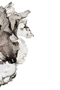 carnation | STILL  (mary jo hoffman) Parametrisches Design, Foto Art, Arte Pop, Of Wallpaper, Botanical Illustration, Abstract Art, Drawings, Artwork, Prints