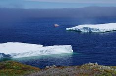 Twillingate, Newfoundland is one of the best places in the world to see icebergs. Several coastal trails offer excellent iceberg viewing from May to July. Central America, North America, Newfoundland Canada, Boat Tours, Amazing Destinations, The Good Place, Coastal, Trail, Mexico