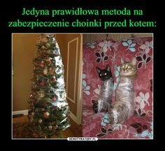 Znaleziono w Google na stronie wykop.pl Cute Funny Animals, Cute Cats, Funny Images, Funny Photos, Wtf Funny, Funny Jokes, Percy Jackson Memes, Bad Memes, Wholesome Memes