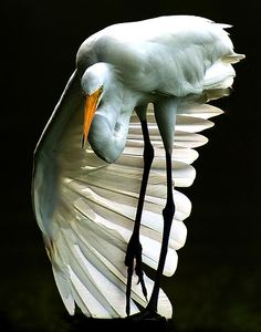 ~~Egret by Ronald Broome~~