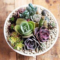 white peony cactus - Поиск в Google