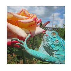 a moment to stop & smell the roses#flowers#rose#creature#botanical#nature#natureinspired#sunday#beauty#psychedelic#travel#garden#jewelry#jewellery#handmade#hawaii#ジュエリー #ハンドメイド #ハワイ#自然