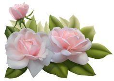 Beautiful Three Pink Roses PNG Image: