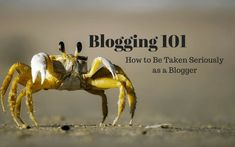 Blogging 101: How to be taken seriously as a blogger