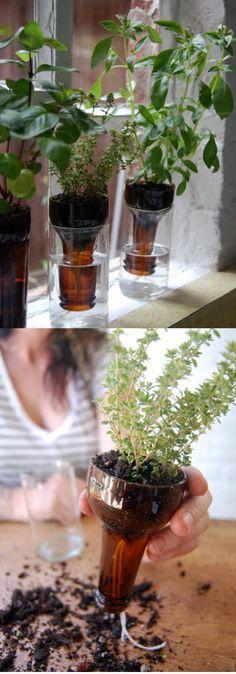 Self watering for herbs | Best DIY Self-Watering System Ideas Self Watering Bottle, Self Watering Containers, Self Watering Planter, Wine Bottle Planter, Glass Planter, Bottle Garden, Cool Diy, Clever Diy, Container Gardening