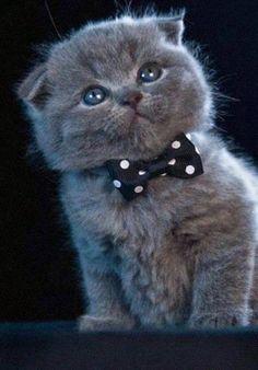 Top 5 Aggressive Cat mother nature moments