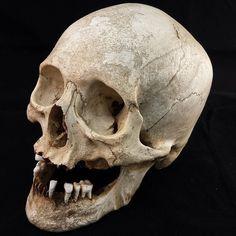 Sugar Skull Decor, Sugar Skull Art, Tattoo Black, Black And Grey Tattoos, Skull Reference, Real Skull, Mexican Skulls, Human Skull, Vanitas