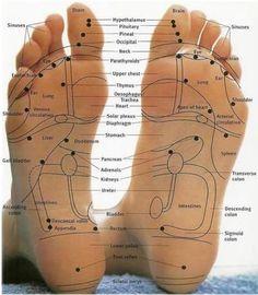 Foot Reflexology Chart-focus points for essential oils