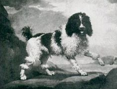 The Poodle, 1600s painting of the traditional poodle