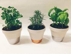 cultured. - DIY: Indoor Herb Garden