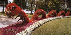 A fifty foot inchworm from Cypress Gardens, Florida. Topiary Garden, Garden Art, Topiaries, Cypress Gardens Florida, Blooming Plants, Horticulture, Water Features, Greenery, Grass