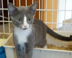 Who could resist this face?  #adoptablekittens available...the momma #cat too!  Please share.