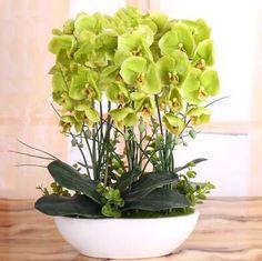 Ny produkt i onlineshoppen -  Orkidee,Phalaenop....    Finns på  http://solpanelerna.kina-import.se/products/orkidee-phalaenopsis-100-fron-5?utm_campaign=social_autopilot&utm_source=pin&utm_medium=pin