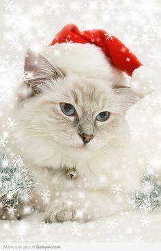 Christmas Cat - goaww.com