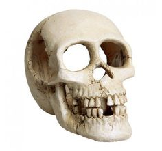 These incredibly realistic decorations are hand crafted and painted using only the highest quality materials. Non-toxic, and safe for use in both freshwater and saltwater aquariums. Enhance your aquarium with any of these exciting decorations! Saltwater Aquarium, Aquarium Fish Tank, Aquarium Decorations, Underwater, Pet Supplies, Skull, Pets, Crafts, Aquariums
