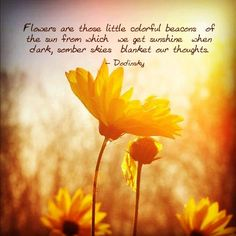 Flowers quotes colorful flowers bright sunshine
