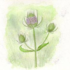 Rie Designed Sketch A Day, Doodle Sketch, Wild Flowers, Plant Leaves, Doodles, Sketches, Creative, Artist, Painting