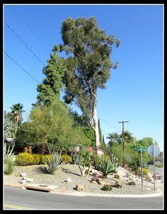 Rancho Reubidoux under blue skies