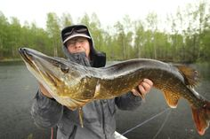 128 cm pike! #fishing #nordic #scandinavia #pike
