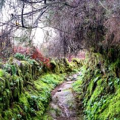 Samhain, Country Roads, Halloween, Nature, Portugal, Inspirational, City, The World, Secret Places