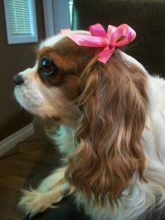 Beauty comes with  cute bows to wear on your head!