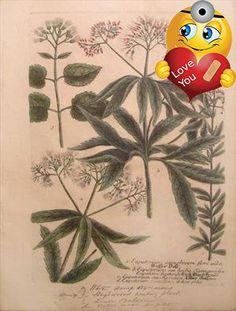 #eyesonwalls Johann Wilhelm Weinmann (1683-1741) was an influential pharmacist and #botanist, and director of the longest established pharmacy in Regensburg, Ger...