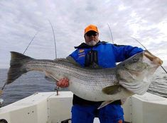 81.88 lbs New world record for stripped bass! Caught in Virgina Crappie Fishing Tips, Fishing Guide, Best Fishing, Kayak Fishing, Fishing Knots, Saltwater Fishing, Best Bass Fishing Lures, Fishing Stuff, Fishing In Canada