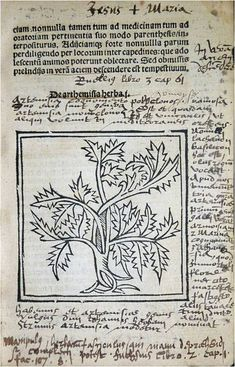 Marginalia. This early herbal forms part of our Continental collection and was published in Paris around  1520. Our copy of Herbarum varias qui vis cognoscere vires ('Various types of herbs that you want to kn...