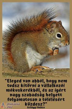 Szilágyi Balázs Mentor Klub! Hozzuk ki együtt a vállalkozásodból a maximumot! Animals, Animales, Animaux, Animal, Animais