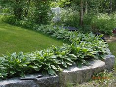Kuunlilja Flower Bed Designs, Hosta Gardens, Shade Garden, Dream Garden, Garden Planning, Garden Inspiration, Curb Appeal, Garden Landscaping, Outdoor Spaces