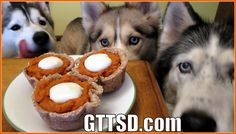 PUMPKIN PIE FOR DOGS | Dog Treat Recipe for Thanksgiving