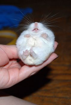 who says you can't teach an old hamster new tricks?