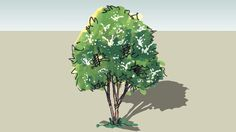 tree - 3D Warehouse