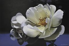 My name is Lynley Brownridge, I live and work in Alexandra, Central Otago, New Zealand. I paint large floral paintings of Peonies, Iris and Roses. Peonies, Artworks, Succulents, Rose, Floral, Artist, Flowers, Plants, Painting