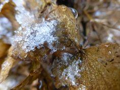 snow, thema : het weer (febr 2016)