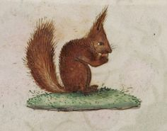 From the Medieval Manuscripts blog post 'A Medieval Menagerie'. Detail of a squirrel eating a nut, Add MS 18852, f. 88v