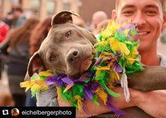 #Repost @eichelbergerphoto  Soulard Pet Parade Mardi Gras St. Louis  #petparade #soulard #mardigrasstlouis #mardigras #dogs #people  #costumes #beads #parade #stl #stlouis #downtown_stl #fun #photography #photographer #mardigras_stl #streetphotography #nikon #fox2now