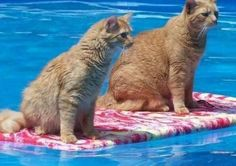 """""""What are you looking at?"""" """"Some cats, not surfing"""" """"No. Where?"""""""