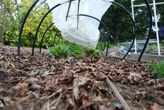 Make your own organic mulch. Leaves, grass clippings, stems, and stalks from harvested vegetables, corn husks, pea hulls, and fine twigs are good materials for composting. Learn more in our guide. (Photo by OSU's EESC)